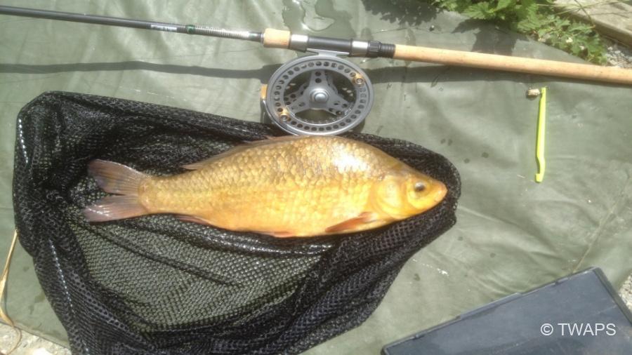 TWAPS-Fishing-Kent-9
