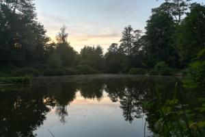 Ian Collier Cobham Evening