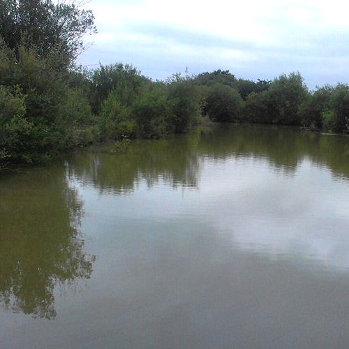 Fishing Lakes - Paddock Wood