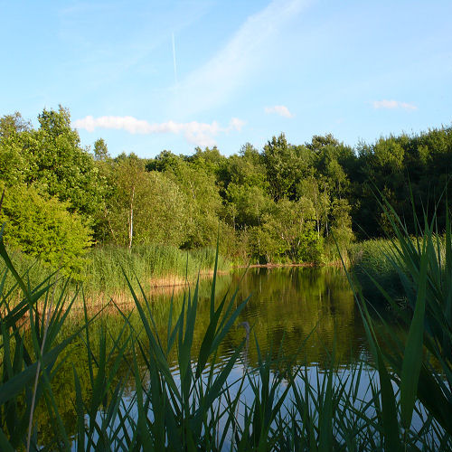 Fishing Lakes - Shorne Country Park